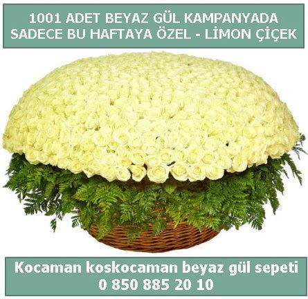 1001 adet beyaz gül sepeti özel kampanyada  Aydın incir çiçek çiçek gönderme sitemiz güvenlidir