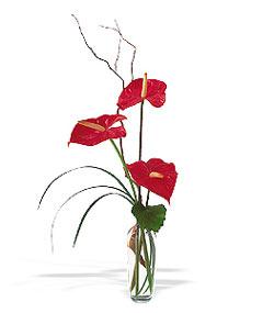 Aydın incir çiçek çiçek siparişi sitesi  cam yada mika Vazoda 3 adet  antoryum