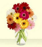 Aydın incir çiçek çiçek yolla , çiçek gönder , çiçekçi   cam yada mika vazoda 15 özel gerbera