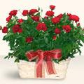 Aydın incir çiçek incir çiçek İnternetten çiçek siparişi  11 adet kirmizi gül sepette