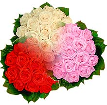 3 renkte gül seven sever   Aydın incir çiçek çiçek , çiçekçi , çiçekçilik