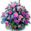 karisik mevsim kir çiçekleri  Aydın incir çiçek çiçek gönderme sitemiz güvenlidir