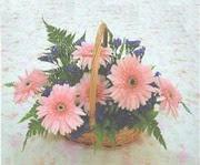 gerbera çiçeklerinde sepet   Aydın incir çiçek çiçek yolla