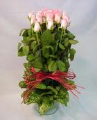 13 adet pembe gül silindirde   Aydın incir çiçek çiçek yolla