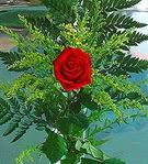 1 adet kirmizi gül buketi   Aydın incir çiçek çiçek siparişi vermek