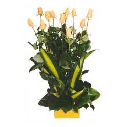 12 adet beyaz gül aranjmani  Aydın incir çiçek kaliteli taze ve ucuz çiçekler