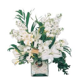 Aydın incir çiçek internetten çiçek siparişi  sadece beyazlardan olusmus mevsim cam yada mika tanzim