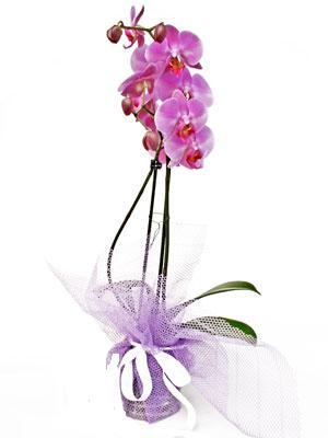 Aydın incir çiçek anneler günü çiçek yolla  Kaliteli ithal saksida orkide