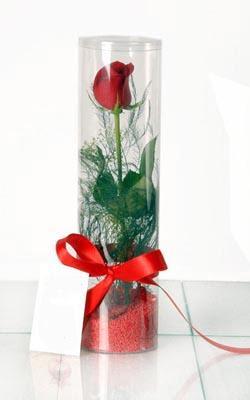 Aydın incir çiçek çiçek yolla  Silindir vazoda tek kirmizi gül