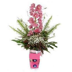 Aydın incir çiçek hediye çiçek yolla  cam yada mika vazo içerisinde tek dal orkide çiçegi