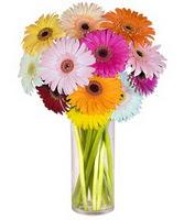 Aydın incir çiçek internetten çiçek siparişi  Farkli renklerde 15 adet gerbera çiçegi