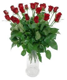 Aydın incir çiçek çiçekçi telefonları  11 adet kimizi gülün ihtisami cam yada mika vazo modeli