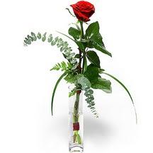 Aydın incir çiçek 14 şubat sevgililer günü çiçek  Sana deger veriyorum bir adet gül cam yada mika vazoda