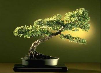 ithal bonsai saksi çiçegi  Aydın incir çiçek çiçekçi mağazası