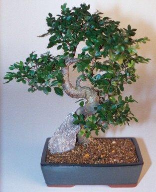 Aydın incir çiçek çiçek gönderme sitemiz güvenlidir  ithal bonsai saksi çiçegi  Aydın incir çiçek çiçek siparişi sitesi