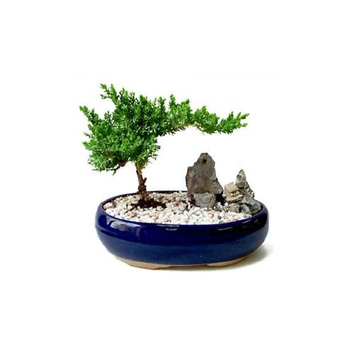 ithal bonsai saksi çiçegi  Aydın incir çiçek çiçek gönderme