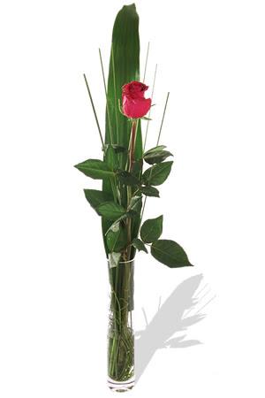 1 adet cam vazo içerisinde kirmizi gül  Aydın incir çiçek çiçek , çiçekçi , çiçekçilik