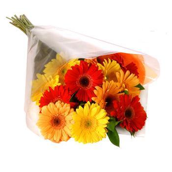 Karisik renklerde gerbera buketi  Aydın incir çiçek cicekciler , cicek siparisi