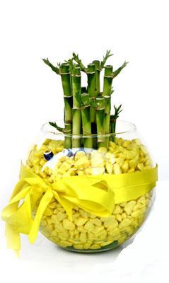 cam fanus içerisinde bambo  Aydın incir çiçek internetten çiçek satışı