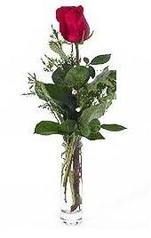 Vazo içerisinde 1 adet kirmizi gül  Aydın incir çiçek cicekciler , cicek siparisi