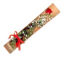 1 adet kirmizi gül  Aydın incir çiçek çiçekçi telefonları