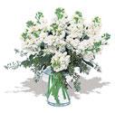Aydın incir çiçek cicek , cicekci  Vazoda beyaz güzel sebboylar