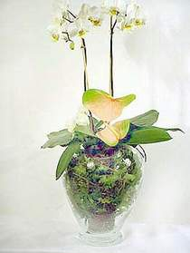Aydın incir çiçek çiçek satışı  Cam yada mika vazoda özel orkideler