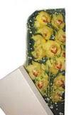 Aydın incir çiçek çiçek gönderme  Kutu içerisine dal cymbidium orkide