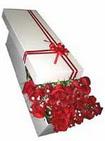 Aydın incir çiçek çiçekçi telefonları  11 adet 1.kalite magnum güller
