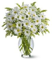 Vazo içerisinde beyaz krizantem çiçekleri  Aydın incir çiçek çiçekçi mağazası