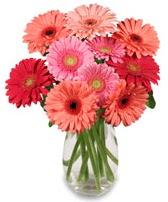 vazo içerisinde 13 adet gerbera çiçeği  Aydın incir çiçek çiçek siparişi sitesi