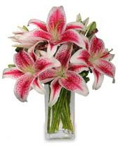 Vazo içerisinde 5 dal kazablanka çiçeği  Aydın incir çiçek cicekciler , cicek siparisi