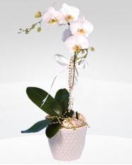 1 dallı orkide saksı çiçeği  Aydın incir çiçek online çiçekçi , çiçek siparişi