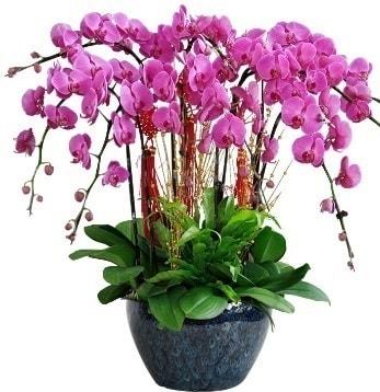 9 dallı mor orkide  Aydın incir çiçek 14 şubat sevgililer günü çiçek