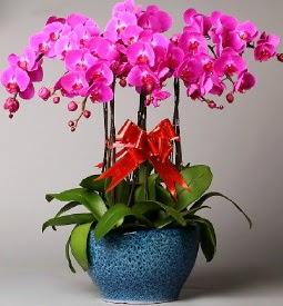7 dallı mor orkide  Aydın incir çiçek çiçek online çiçek siparişi