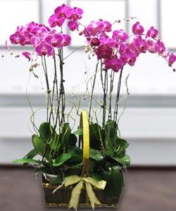 4 dallı mor orkide  Aydın incir çiçek güvenli kaliteli hızlı çiçek