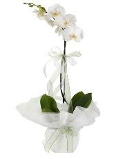 1 dal beyaz orkide çiçeği  Aydın incir çiçek çiçek siparişi vermek