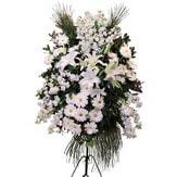 Aydın incir çiçek cicek , cicekci  Ferforje beyaz renkli kazablanka