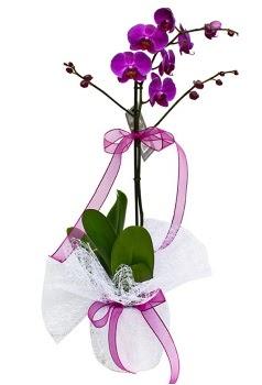 Tek dallı mor orkide  Aydın incir çiçek çiçekçi telefonları