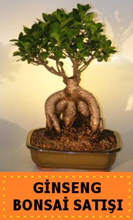 Ginseng bonsai satışı japon ağacı  Aydın incir çiçek cicek , cicekci