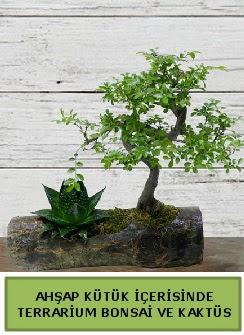 Ahşap kütük bonsai kaktüs teraryum  Aydın incir çiçek internetten çiçek siparişi