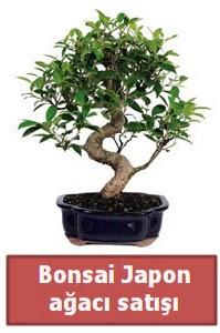 Japon ağacı bonsai satışı  Aydın incir çiçek çiçek siparişi sitesi