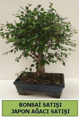Minyatür bonsai japon ağacı satışı  Aydın incir çiçek çiçek gönderme sitemiz güvenlidir
