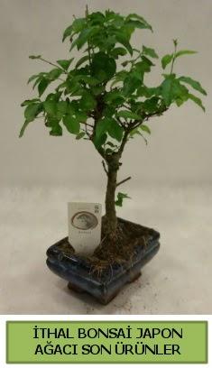 İthal bonsai japon ağacı bitkisi  Aydın incir çiçek hediye sevgilime hediye çiçek