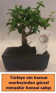 Japon ağacı bonsai satışı ithal görsel  Aydın incir çiçek çiçek yolla