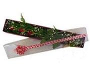 Aydın incir çiçek hediye çiçek yolla  3 adet gül.kutu yaldizlidir.