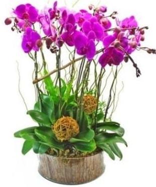 Ahşap kütükte lila mor orkide 8 li  Aydın incir çiçek internetten çiçek satışı
