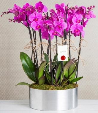 11 dallı mor orkide metal vazoda  Aydın incir çiçek çiçek gönderme sitemiz güvenlidir