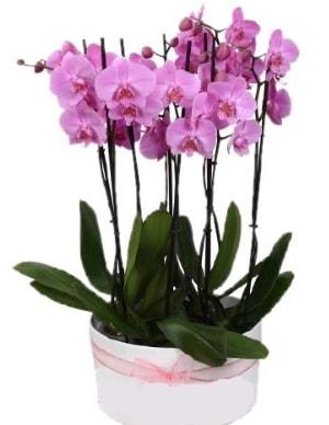 Beyaz seramik içerisinde 7 dallı mor orkide  Aydın incir çiçek çiçekçi telefonları