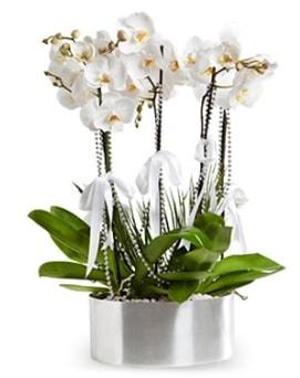 Beş dallı metal saksıda beyaz orkide  Aydın incir çiçek çiçek yolla